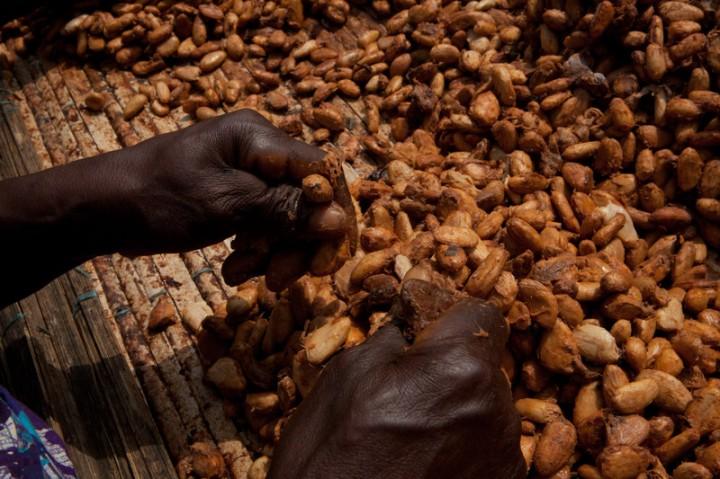 N'Dri Chantal Konan, 70 anos, separa sementes da polpa de cacau em Allahteresekro, na Costa do Marfim. Foto: Peter DiCampo/Oxfam America.