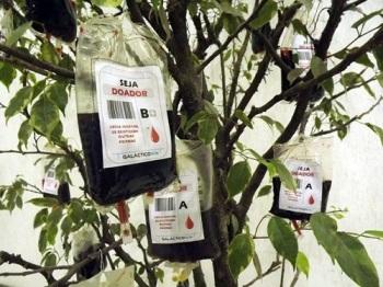 Estudantes colocam bolsas de sangue em árvore para estimular doação em Santos/SP. Foto de Ivair Vieira Jr/G1.